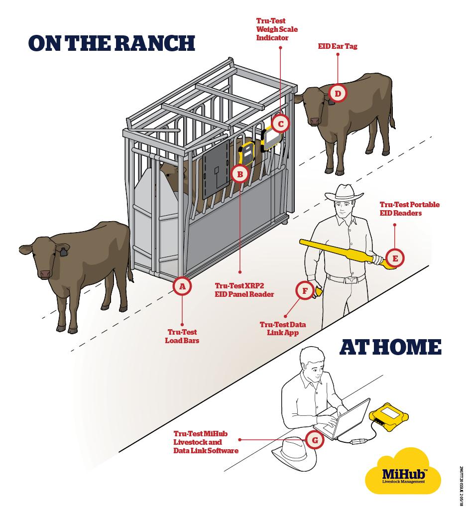 Electronic Identification Eid Tru Test Livestock