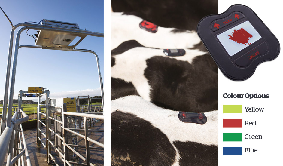Heat Detection System Tru Test Dairy