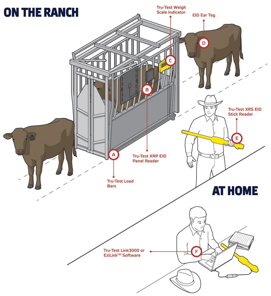 Weighing Tru Test Livestock Management